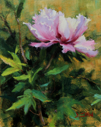 Bill_Inman_Echo_of_a_Dream_10x8_Peony_Oil_Painting