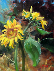 Bill_Inman_Sunflower_The_Embrace_16x12_Oil_Painting